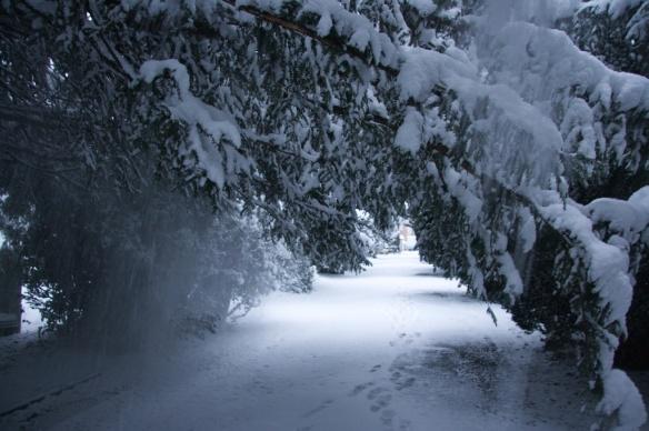 樹枝受不住積雪的壓力,打個哆嗦,把身上的白雪抖下來。
