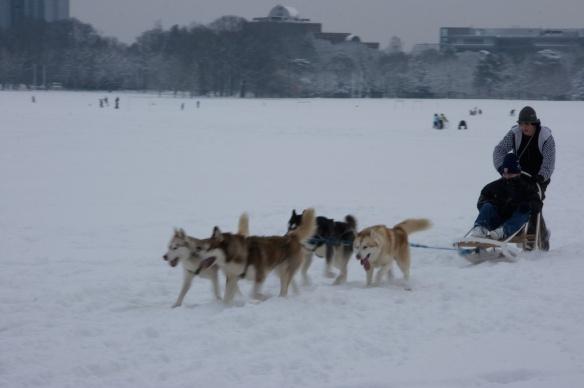 有人趁機會玩雪橇